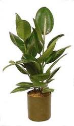 Plantas plantas de interiorplantas de interior - Plantas de interior altas ...